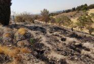سوختن ۲۰۰۰متر از جنگل های چیتگر در آتش سوزی