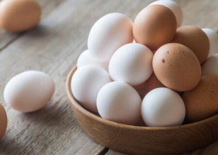 زیان ۷۰۰ تومانی مرغداران در فروش هر کیلو تخممرغ