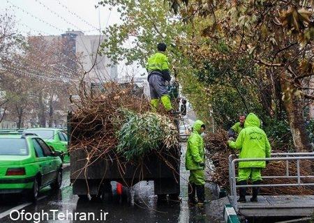 با راه اندازی سایت چیپر سرشاخههای درختان به چرخه بازیافت برمیگردد