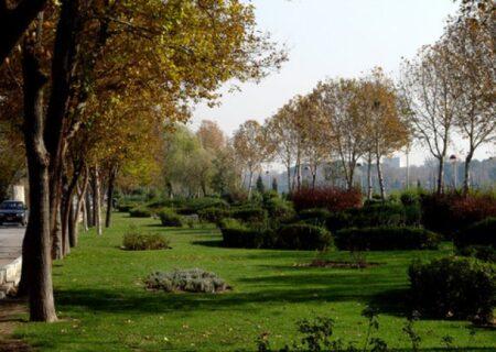منطقه۲۱ و آغاز فصل هرس و بازپیرایی فضای سبز