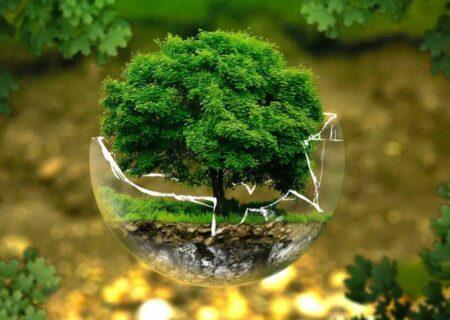 مقابله با آفات در منطقه۱۳ با تمرکز بر روش های دوستدار محیط زیست